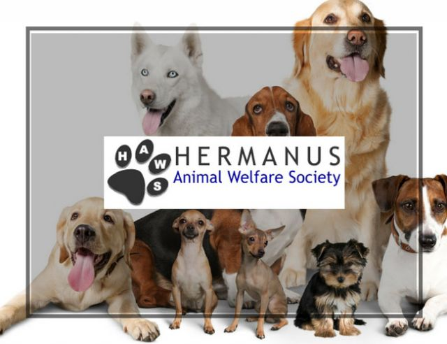 Hermanus Animal Welfare